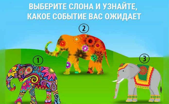 тест: выберите слона